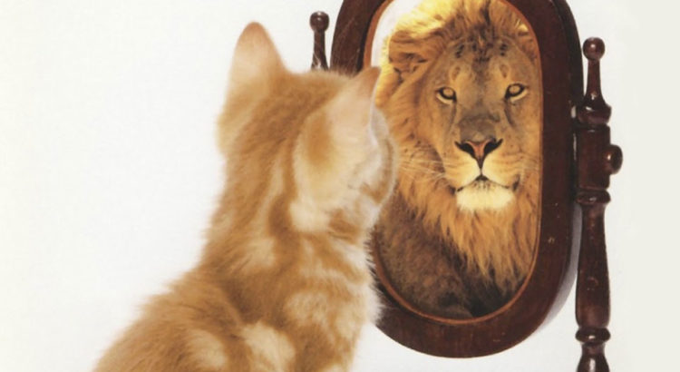Samopouzdanje je vrsta ogledala